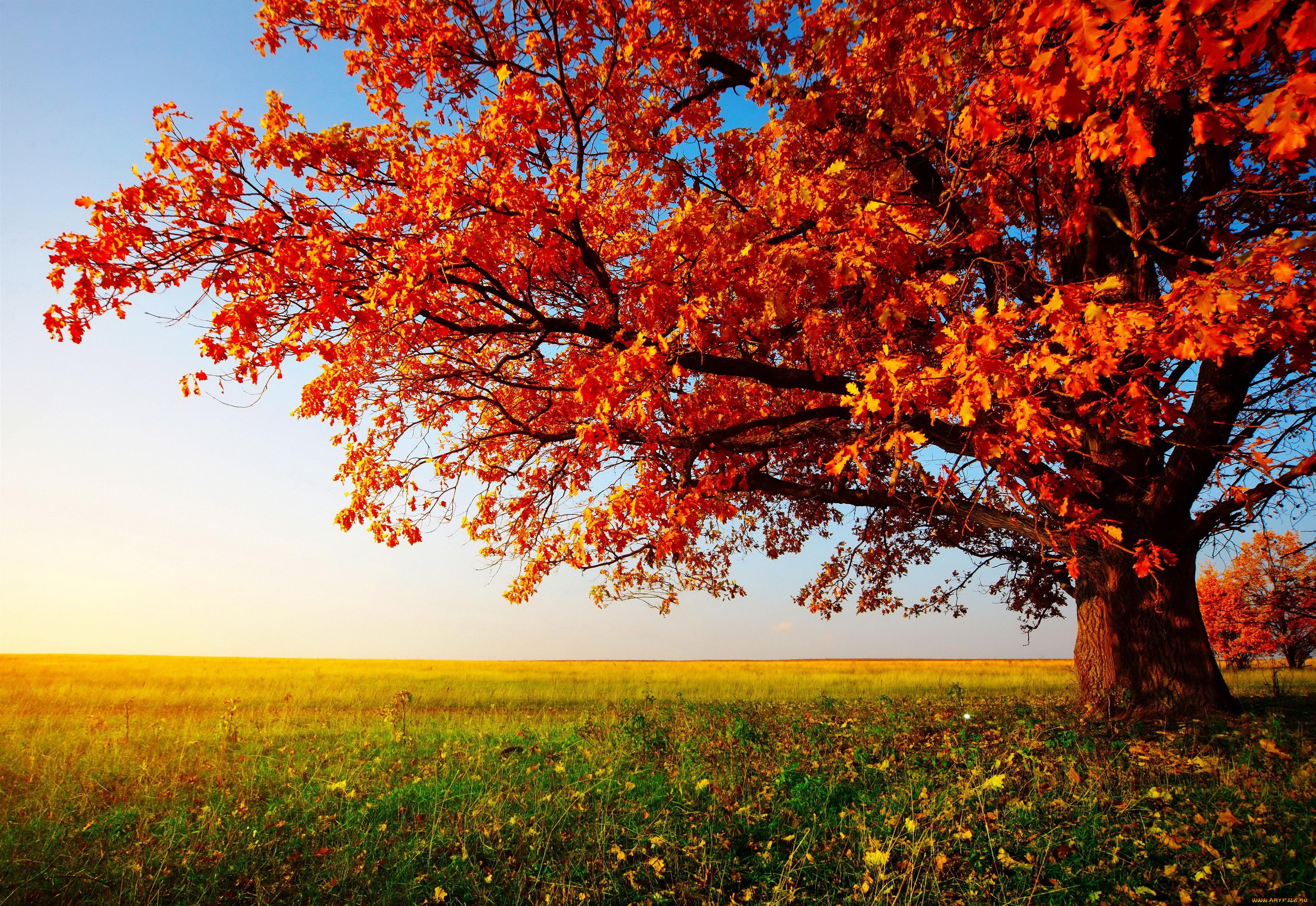 Фото природы осень красивые